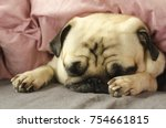 cute pug is sleeping in the bed | Shutterstock . vector #754661815