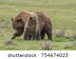 grizzly bears in the grass ... | Shutterstock . vector #754674025