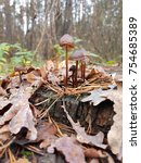 mushrooms on the stump in the... | Shutterstock . vector #754685389