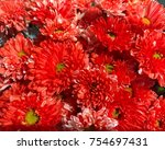 closeup red vibrant mum or...   Shutterstock . vector #754697431