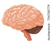 brain vector illustration | Shutterstock .eps vector #754700779
