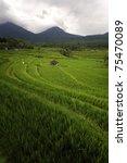 Small photo of Bali - Jati Luwih Rice Terraces