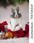 animal  rabbit  bunny on... | Shutterstock . vector #754734319