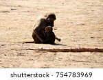 baboon with baby  | Shutterstock . vector #754783969