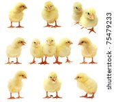 Easter Chick   Isolated Set