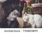 Stock photo black dog and white cat 754803895