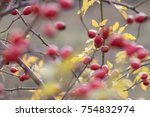 hips on bush | Shutterstock . vector #754832974