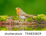 Stock photo european robin erithacus rubecula in the water nice mossy tree branch bird in the nature habitat 754833829