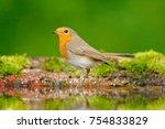 european robin  erithacus... | Shutterstock . vector #754833829