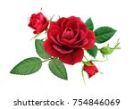 red rose with leaves and buds ... | Shutterstock . vector #754846069