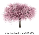 Sour Cherry Tree Isolated On...