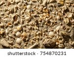 Sea Sand With Tropical Shells....