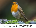 european robin  erithacus... | Shutterstock . vector #754872355