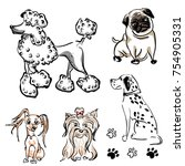 seth of different breeds of...   Shutterstock .eps vector #754905331