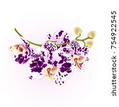 branch orchids flowers  purple...   Shutterstock .eps vector #754922545