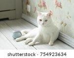 white cat with different eye... | Shutterstock . vector #754923634