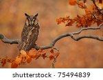 long eared owl   Shutterstock . vector #75494839