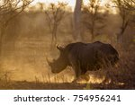 southern white rhinoceros in... | Shutterstock . vector #754956241