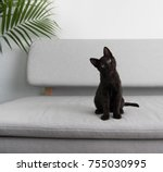 black small kitten sitting on... | Shutterstock . vector #755030995