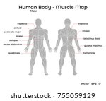 male human body muscle map ... | Shutterstock .eps vector #755059129