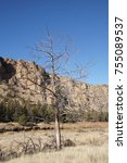Small photo of Juniper snag on the Crooked River valley floor at Smith Rock State Park, Oregon