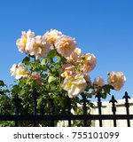 gloriously  magnificent... | Shutterstock . vector #755101099