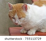 Red And White European Cat...