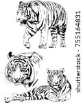 set of vector drawings on the... | Shutterstock .eps vector #755164831