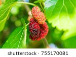 Colorful Berry Fruit Of An...