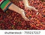 woman coffee farmer is... | Shutterstock . vector #755217217