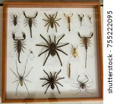 Small photo of Asian spiders collection