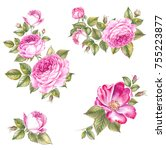 vintage rose collection  great... | Shutterstock . vector #755223877