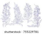 set. willow  chamerion... | Shutterstock .eps vector #755229781