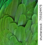 Green Feathers Of A Macaw Parrot
