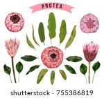 protea flowers  buds and leaves.... | Shutterstock .eps vector #755386819