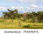 scenic view of vegetation... | Shutterstock . vector #755396971