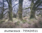 Small photo of woodland near downs tor devein england UK in the misty foggy conditions