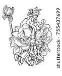 black and white line... | Shutterstock .eps vector #755437699