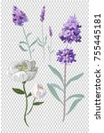 lavender and peony flowers... | Shutterstock . vector #755445181