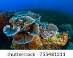tropical reef seascape with... | Shutterstock . vector #755481211