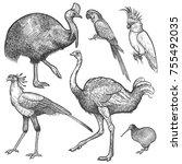 Ara Parrot  Ostrich Emu ...