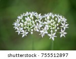 top view of beautiful chives...