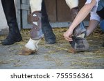 ball and hoof protections for... | Shutterstock . vector #755556361