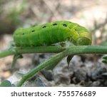 green caterpillar on a branch | Shutterstock . vector #755576689
