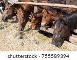 Horses Eat A Silage Behind The...