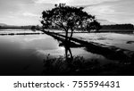 black and white of  tree and... | Shutterstock . vector #755594431