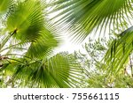 palm leaf close up | Shutterstock . vector #755661115