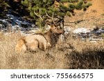bull elk with large antlers... | Shutterstock . vector #755666575