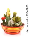 collection of cactus in a pot - stock photo