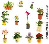 collage of indoor plants of different varieties - stock photo